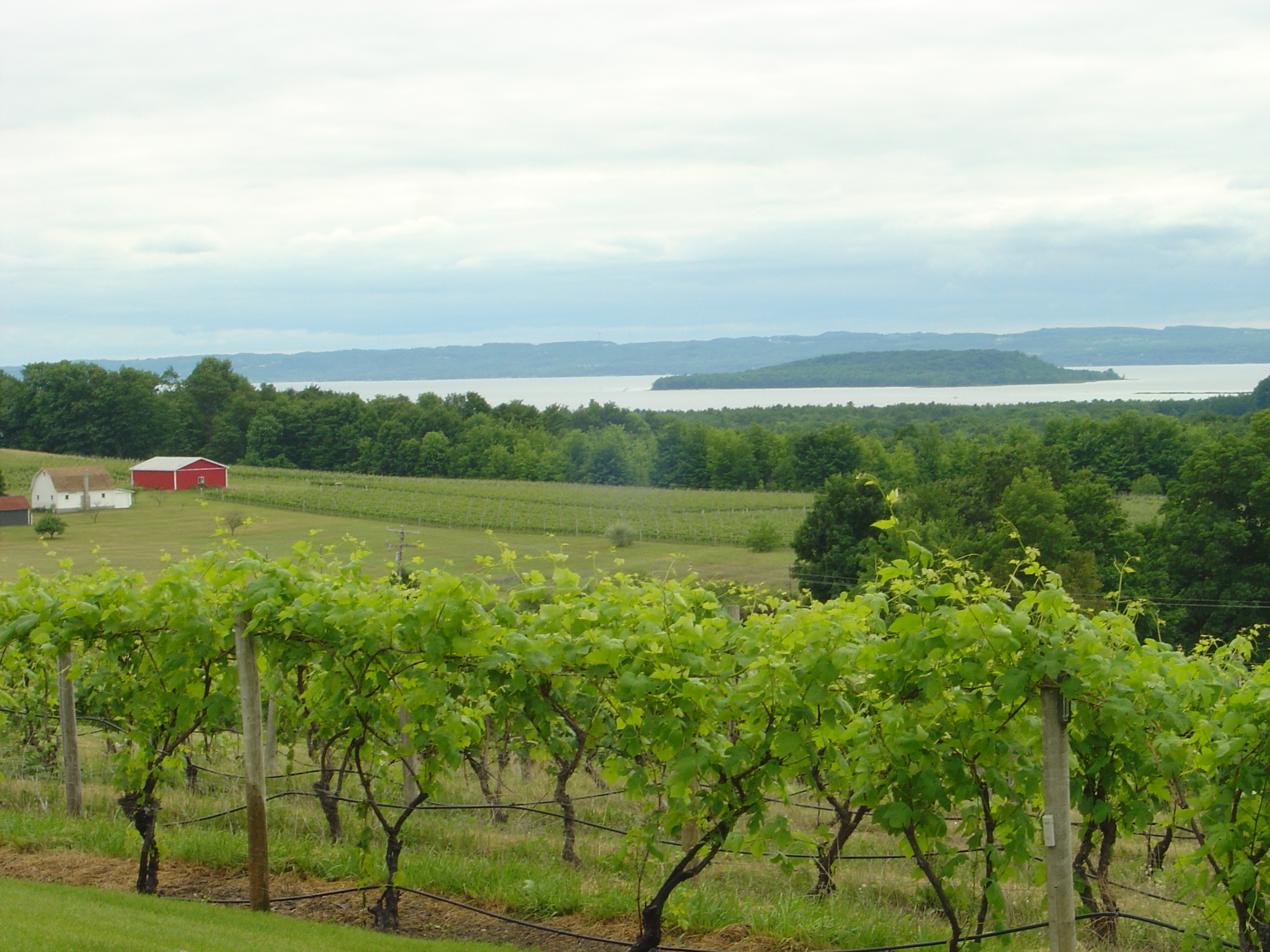 Michigan wine tours